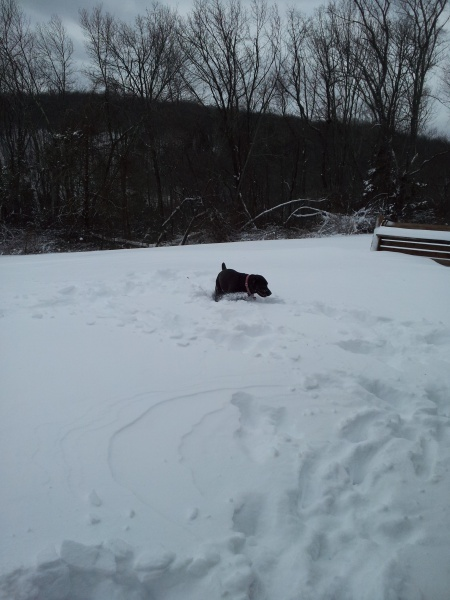 Maya playing in the snow after Blizzard Nemo