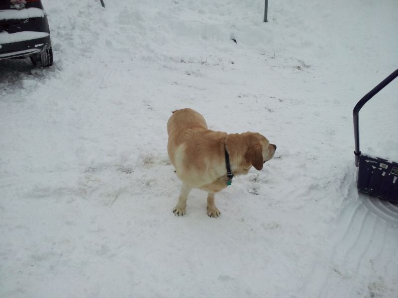 Brody just hanging out in the snow