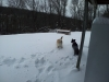Brody and Maya having fun in the snow after Blizzard Nemo